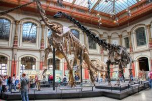 szkielety dinozaurów w londyńskim Muzeum Historii Naturalnej