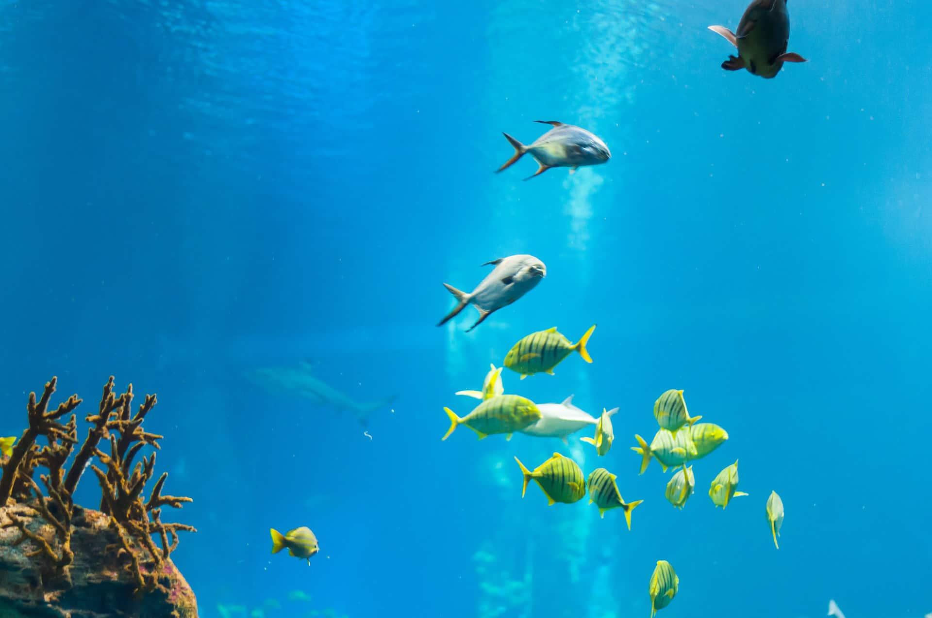 egzotyczne ryby w akwarium we wrocławskim zoo